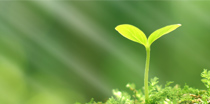 Environmentally friendly manufacturing processes